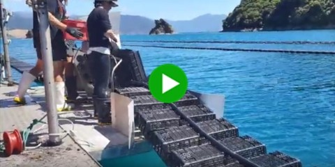 Hexcyl Oyster Baskets used in Flip Farms