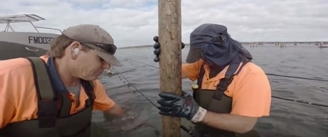 Hexcyl Shellfish Farming - Intallation and Maintenance